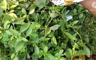 4). Outdoor Desi Mature wife giving Rasili tugjob